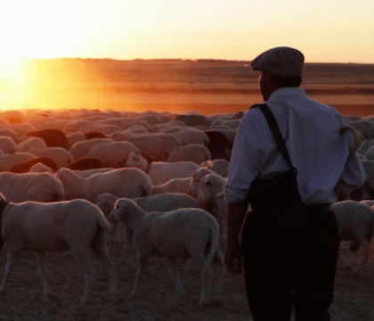 The Shepherd at The Environmental Film Festival