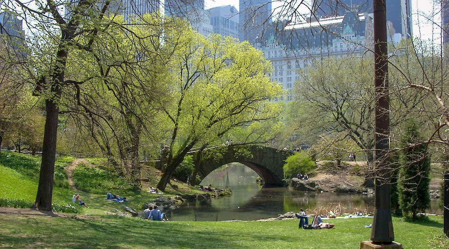 Design the first statue honoring women in Central Park