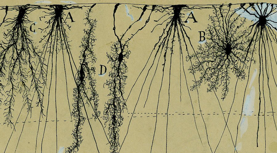 The Beautiful Brain: The Drawings of Santiago Ramón y Cajal